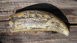 Scrimshaw Replica Resin Sperm Whale Tooth The Ship Starbuck Of Bedford photo