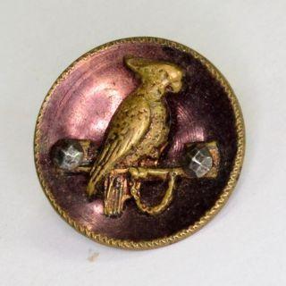 Sewing Button Picture Bird Brass Mop Parrot Cockatiel Facet Antique photo