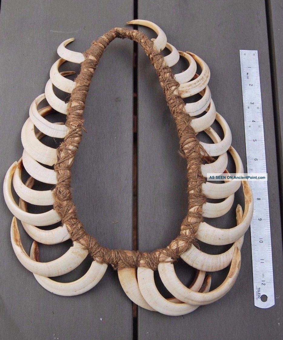 Old Guinea Highland Multiple Boar Tusk Necklace Prestige Ornament Pacific Islands & Oceania photo