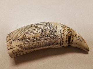 Scrimshaw Whale Tooth Resin Replica The