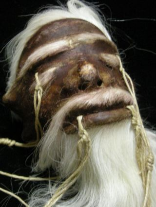 Museum Quality Looks Real Shrunken Head Tsantsa Jivaro Oddity Sideshow Taxidermy photo
