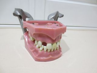 Vintage Columbia Dentoform Dental Model Spring Form Open photo