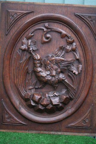 19thc Black Forest Wooden Oak Panel With Game Bird & Leaf Carvings C1880s photo