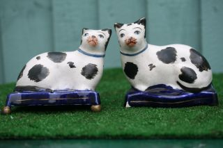Pair: Mid 19thc Staffordshire Recumbent B & W Blue Eyed Cats C1860s photo