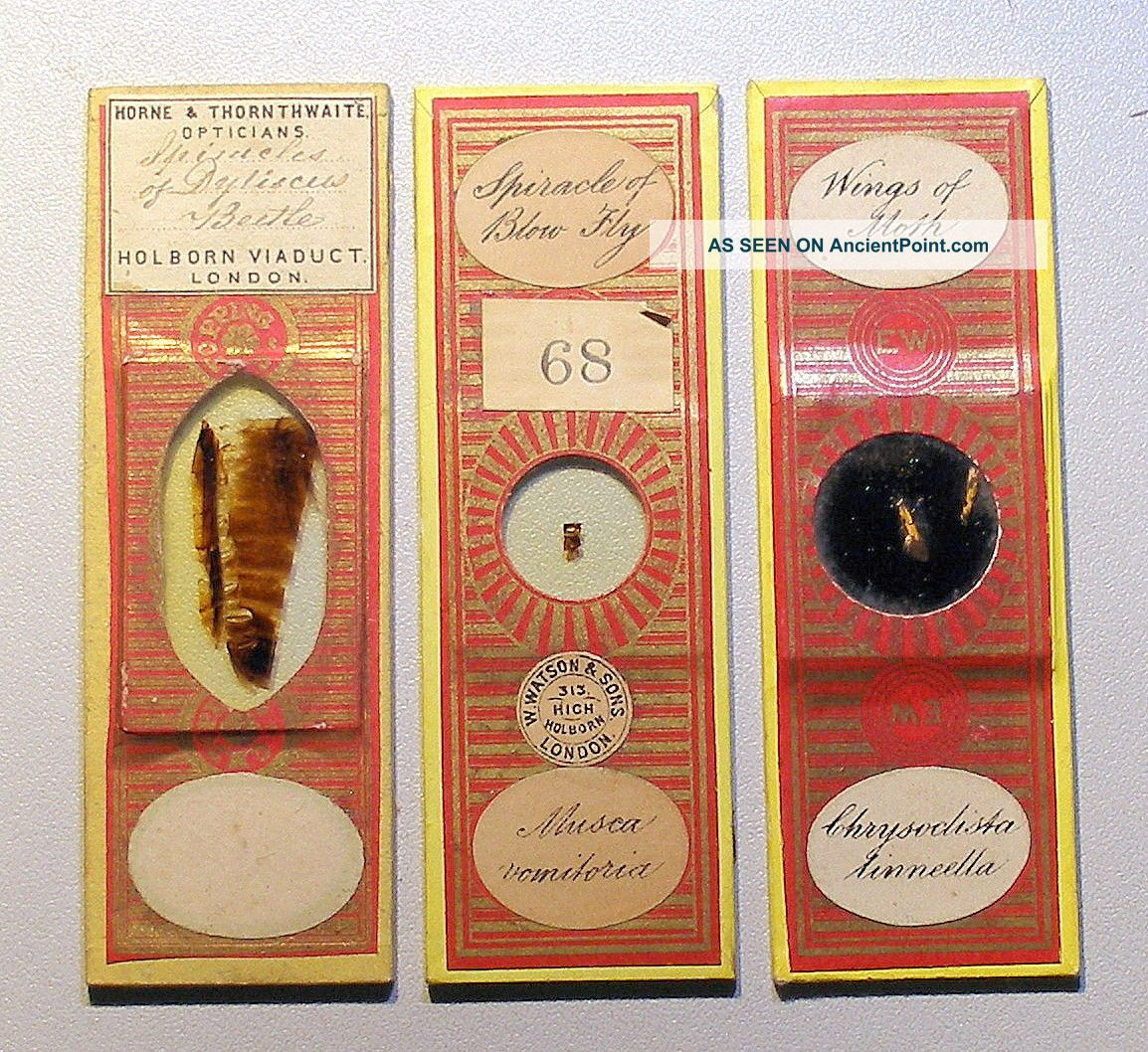 3 X Insect Part Microscope Slides,  By Watson,  Wheeler & Topping Other Antique Science Equip photo