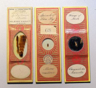 3 X Insect Part Microscope Slides,  By Watson,  Wheeler & Topping photo