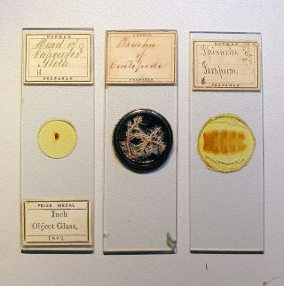 3 X Norman Insect Part,  Microscope Slides photo