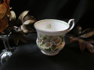 Queens Rosina Tea Cup October Daisy Pattern Teacup Special Flowers photo