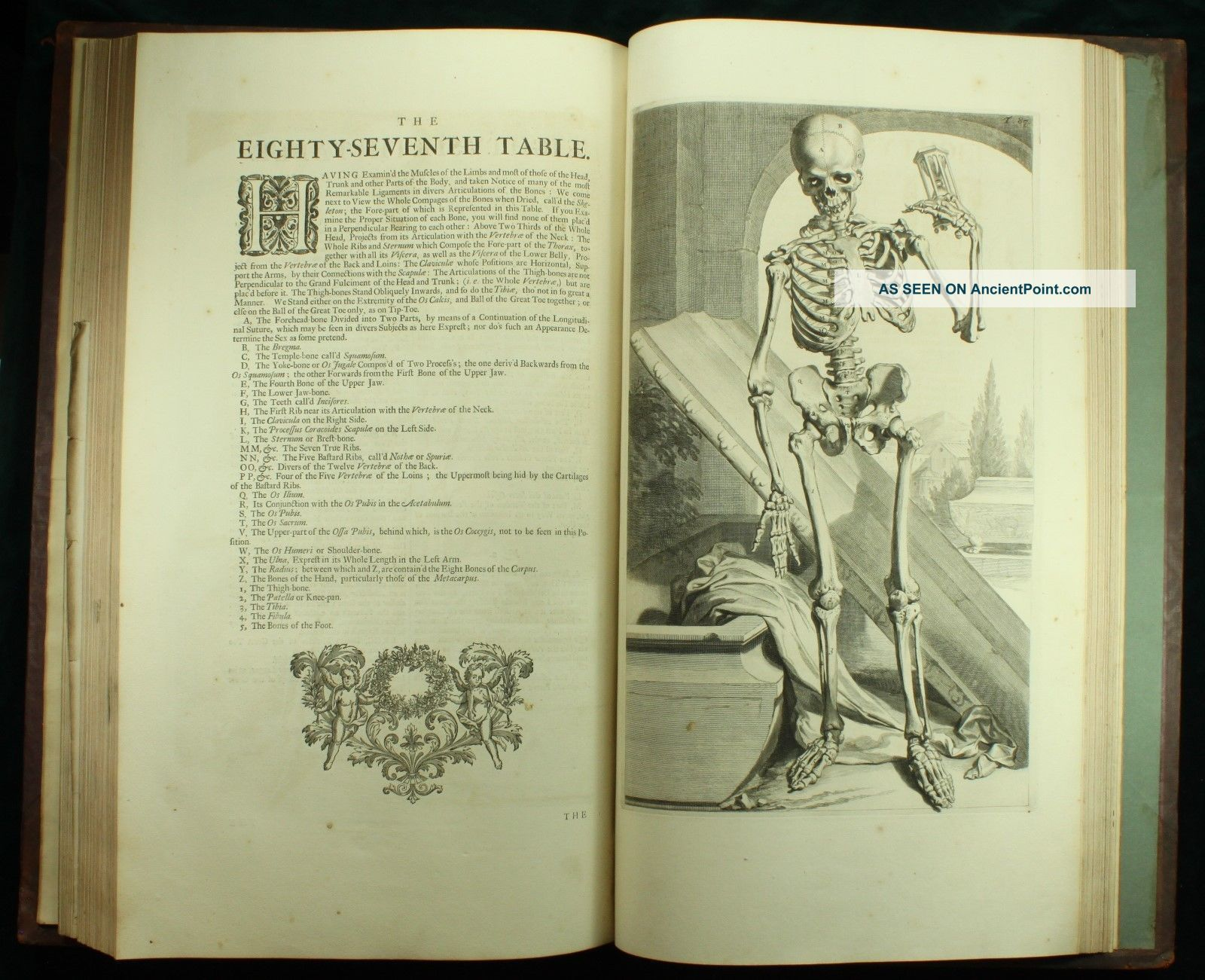 Fantastisch Arbeitsmappe Anatomie Und Physiologie Färbung ...