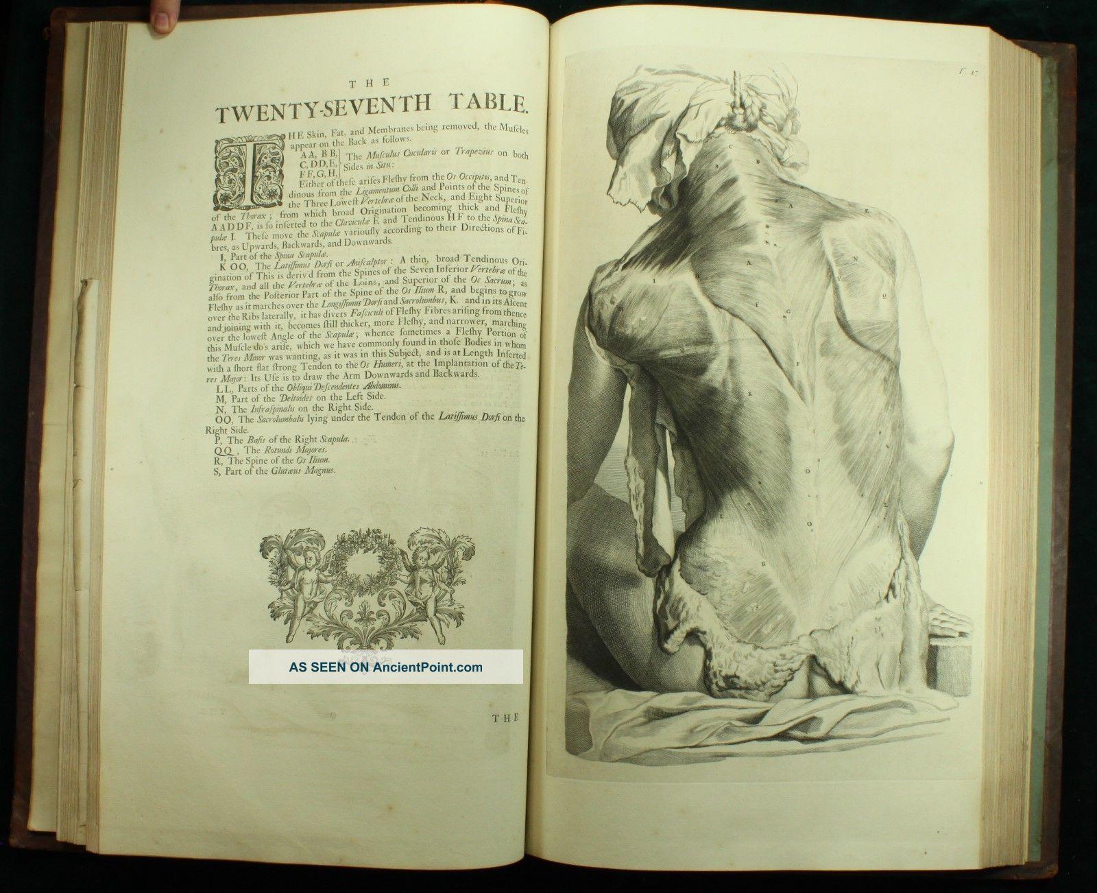Fein Menschliche Anatomie Und Physiologie Laborhandbuch Antworten ...