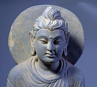 Gandhara: Large Grey Schist Figure Of Buddha.  Circa 2nd - 3rd Century Ad. photo