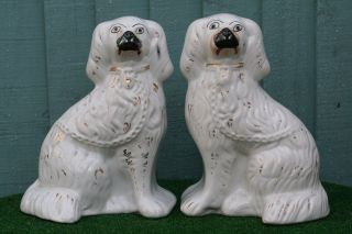 Pair 19thc Staffordshire Seated White,  Gilt & Lustre Spaniel Dogs C1880s photo