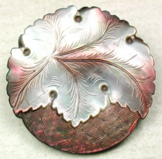 Antique Carved Iridescent Shell Button Detailed Leaf Design 1 & 3/16