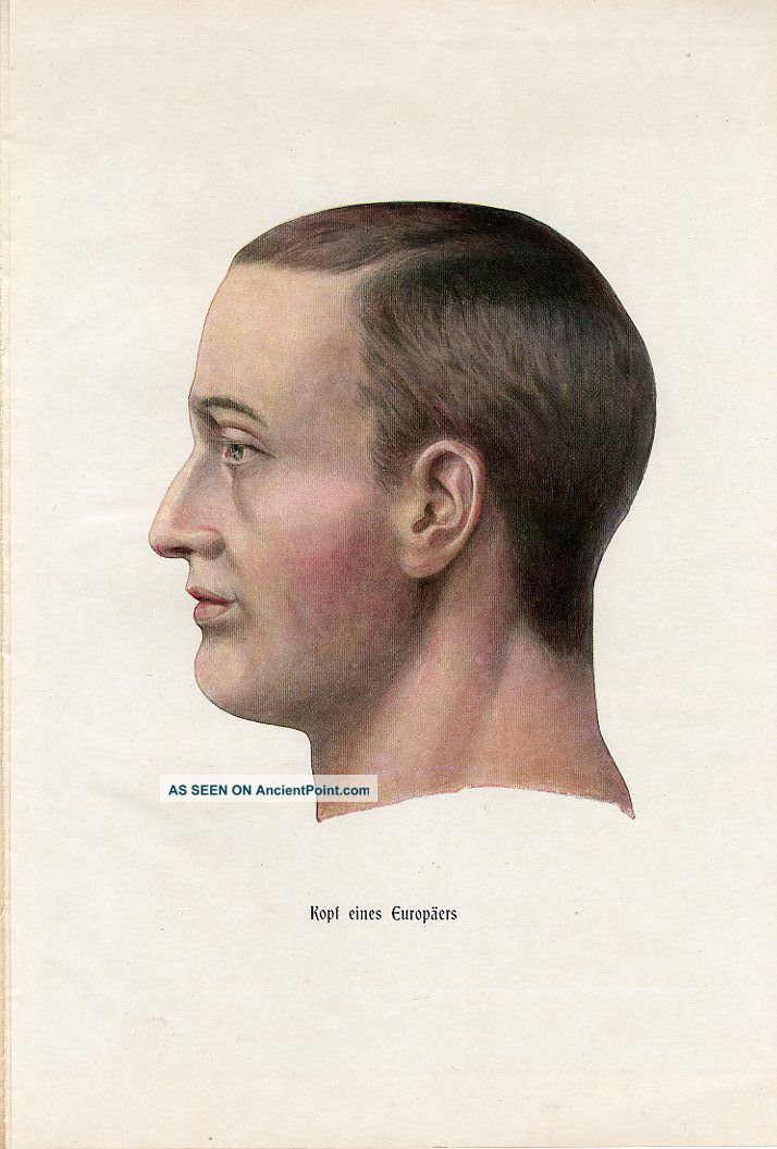 C1900 Human Head Anatomy Model Antique Litho Print H.  Kraemer Other Medical Antiques photo