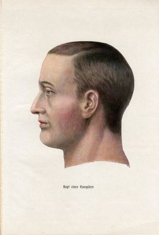 C1900 Human Head Anatomy Model Antique Litho Print H.  Kraemer photo