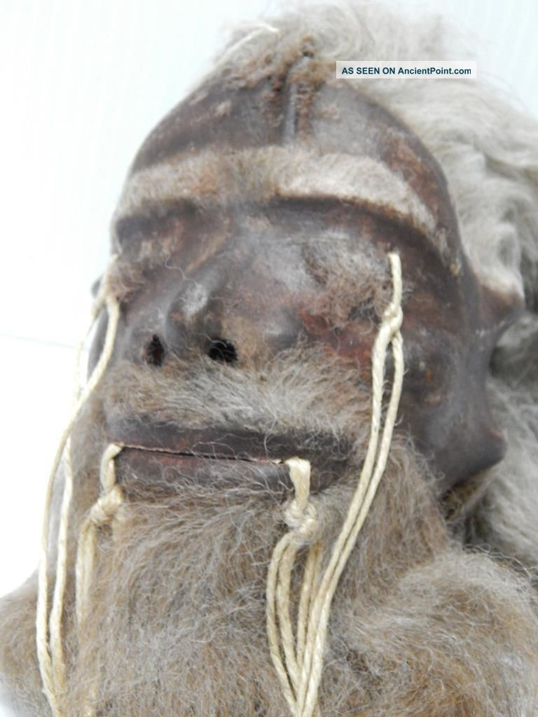 Museum Quality Looks Real Shrunken Head Tsantsa Jivaro Oddity Sideshow Taxidermy Latin American photo