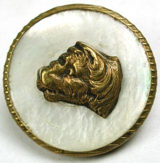 Antique Mop Shell & Brass Button Dog Head Design - Paris Back - 7/8