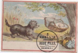 Puppy Rocks Cradle Sholl ' S Malaria Cure Quack Medicine Adv Trade Card C1880s photo
