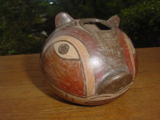 Precolumbian Cuy Guinea Pig Pottery Pot From Nazca Peru photo