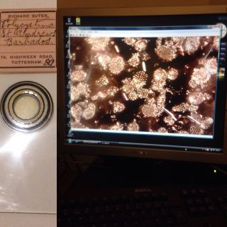 Suter Microscope Slide Polycystina St Andrews Barbados Rare Mount (diatoms) photo