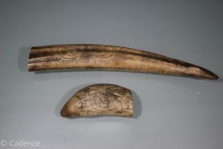 Faux Scrimshaw Sperm Whale Walrus Tusks.  Crossed Pistols & Bedford.  Tempest. photo