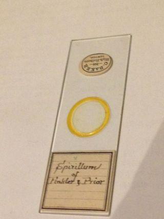 Antique Microscope Slide Baker Spirillum Of Finkler & Prior Victorian Unusual photo