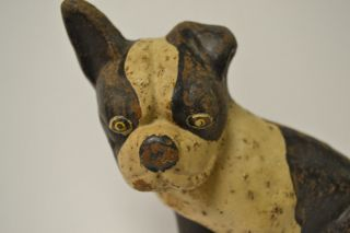 Antique C1895 Cast Iron Dog Doorstop White & Black Floppy Eared Terrier Bulldog photo