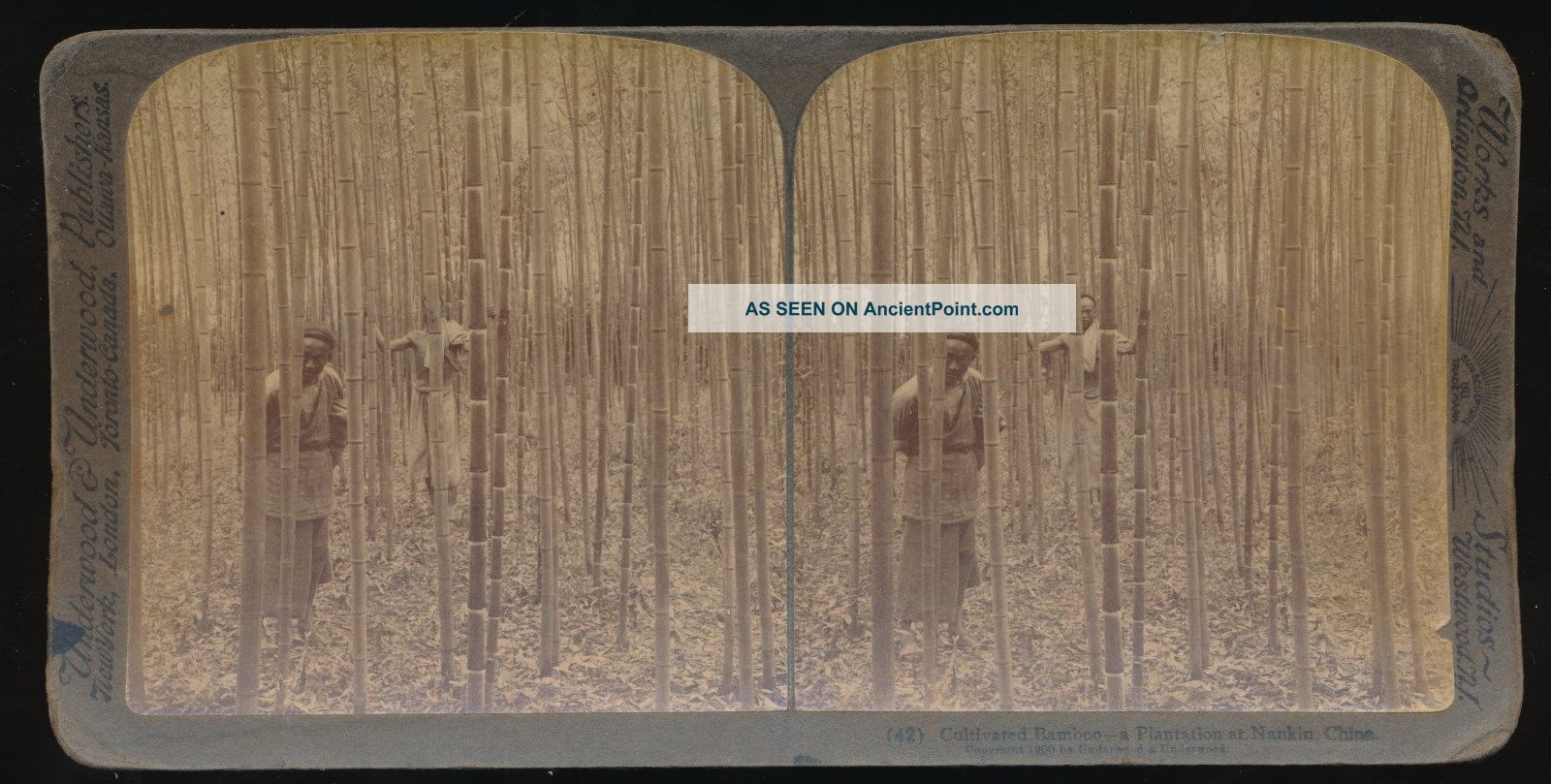 1900 Real Photo Stereoview Cultivated Bamboo Plantation Grove Near Nankin China Other Antique Science Equip photo