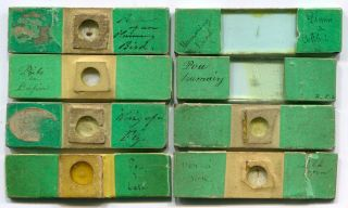 8 Very Early Joseph Bourgogne Microscope Slides,  Ca.  1840s photo