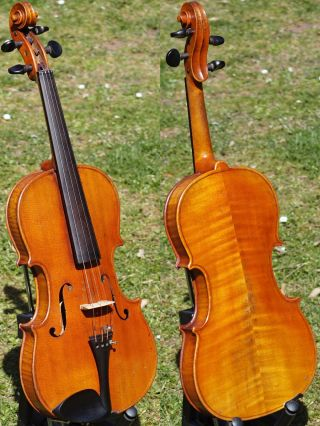 Antique Violin Labelled