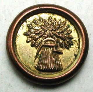 Antique Brass Button Jacksonian Wheat Design Just Over 3/8 Inch photo