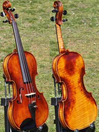 Fine Antique Violin Labelled H.  K.  Bohm,  Znaim (j.  Klotz Model).  Tone photo
