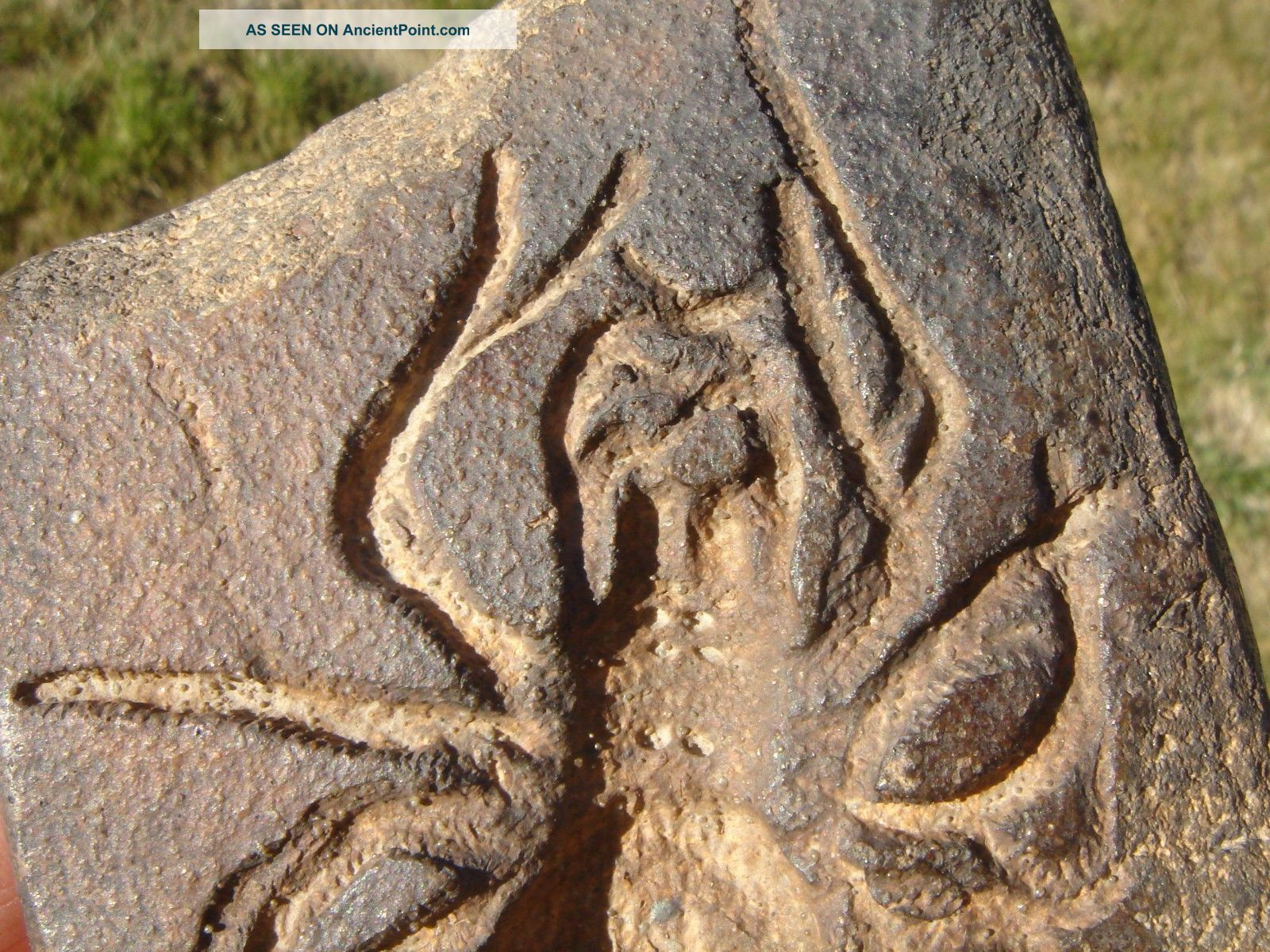 Spider Effigy Stone,  Prehistoric Southwestern Colorado,  1800s Native American photo