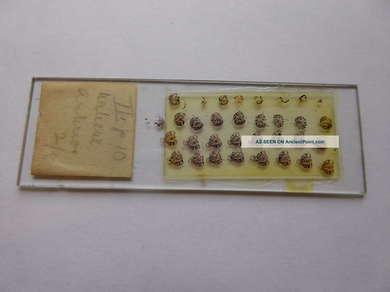 A Very Interesting Antique Glass Microscope Slide - Multiple Subject Other Antique Science Equip photo