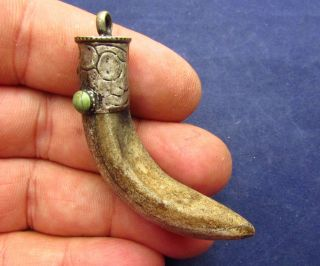 Viking Amulet - Norse Bear Tooth / Claw Pendant 8 - 10th Ad (2643 -) photo